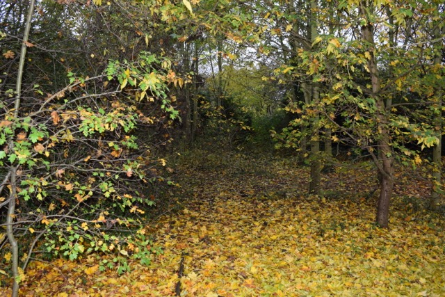 Pensford Field View 1