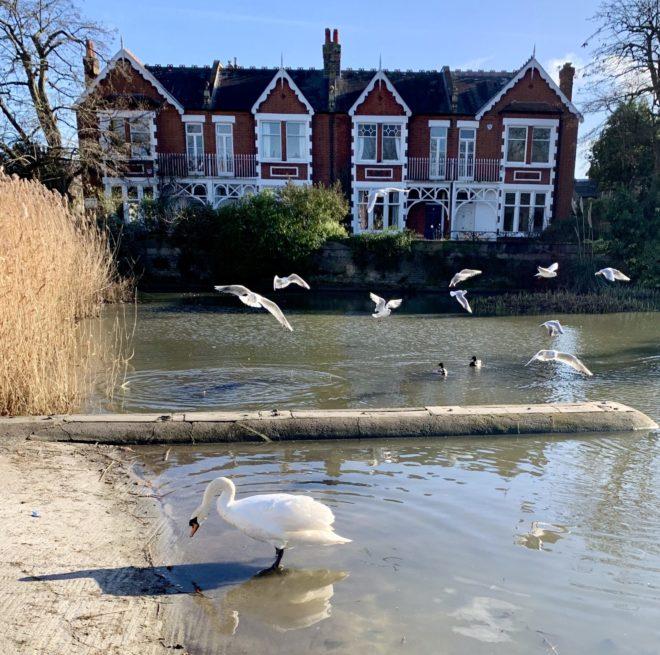 Birdlife on the pond